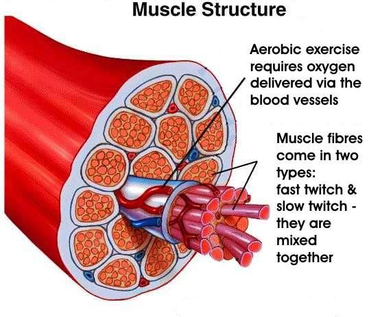 Όνομα: muscle.jpg Εμφανίσεις: 16239 Μέγεθος: 41,3 KB