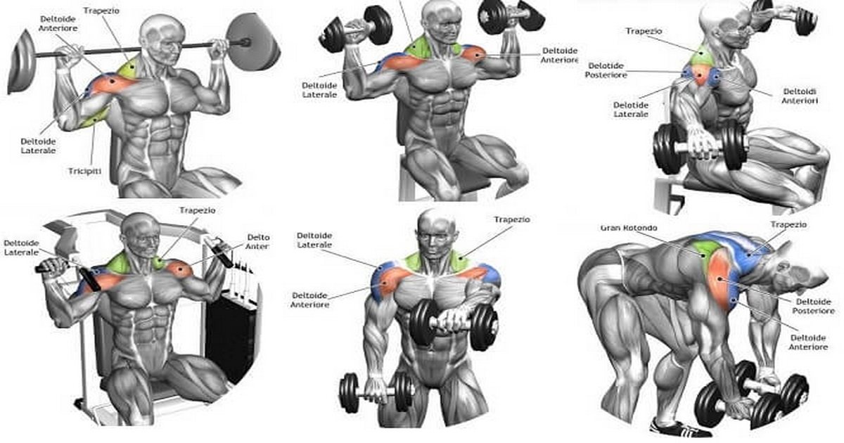 Complete Guide To Delts Training 1