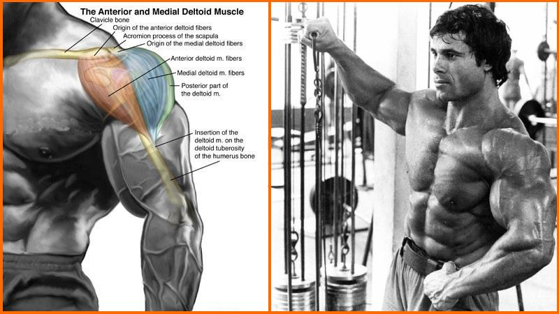 shoulder cable exercises